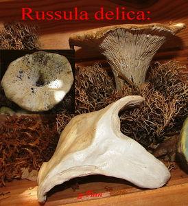 rus_del