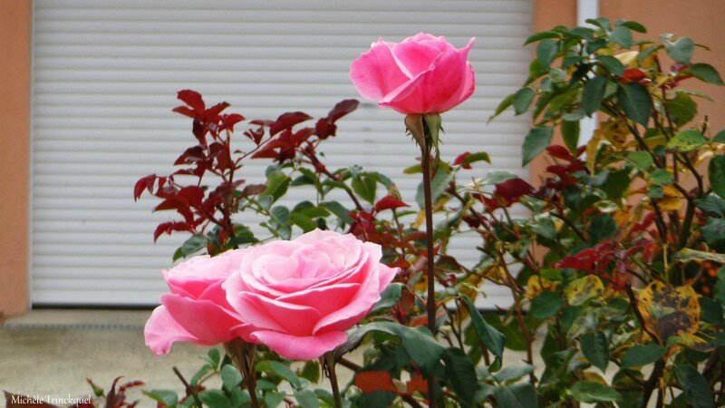 Feuilles, Passiflores, Arbouses, Roses 231016