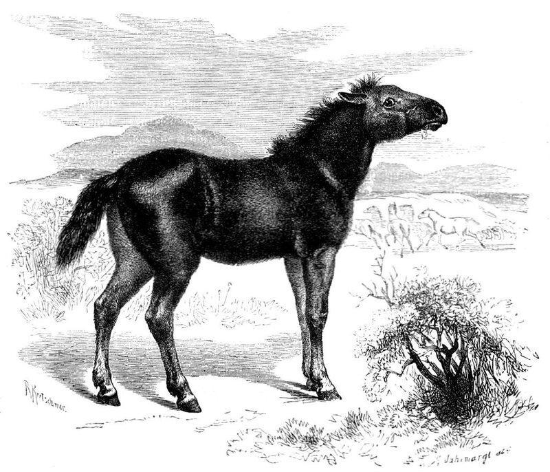 1024px-Steppentarpan_Equus_ferus_gmelini