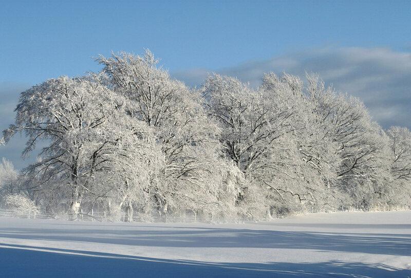 winter-530904_1920