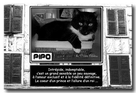 PIPO_nouvelle_imageCopier