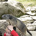 05 Les Marmottes (70)
