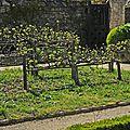 Fruitiers en espalier
