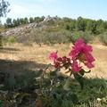Provence Eté 2009