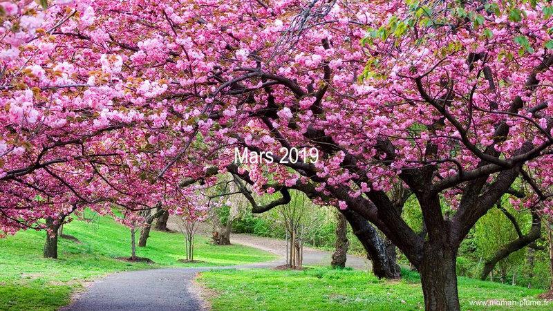 arbre-printemps-fleurie