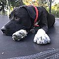 Balou sur son trampoline