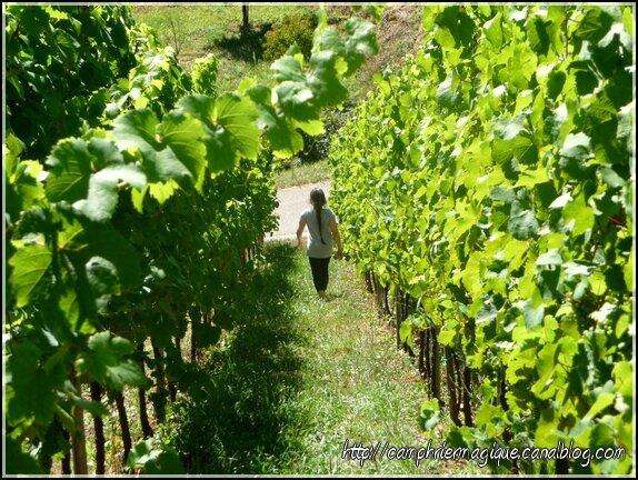 Nina dans les vignes