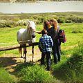 cheval_d_iroise