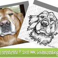 Gloden retriever - caricature dessin d'un bon chien - logo canin