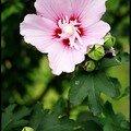 DALIAN - ca fleure bon l'ete