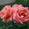fleur ibiza
