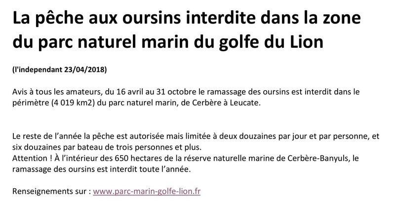 La pêche aux oursins interdite dans la zone du parc naturel marin du golfe du Lion-1