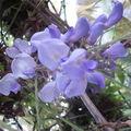 Flower power 14