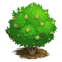 tree_general_cherimoya_bay_icon-59a2ac7473d3a54d17566740c90a