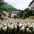 Lourdios-Ichère, transhumance, montée des brebis, pause (64)