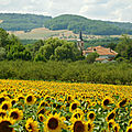 Champs de Tournesol