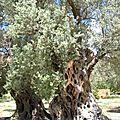 olivier millénaire