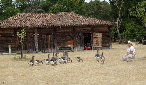 Gardienne oies