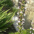 fleurs-de-breche (31)