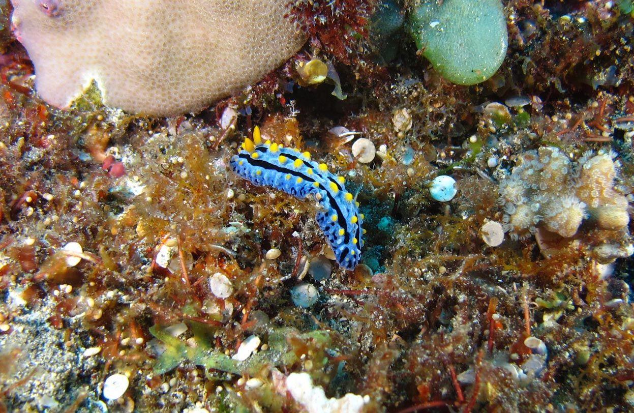 nudibranche (3)