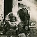 A farmer buring the hoof of a horse before shoeing it in Scotland, May 1921