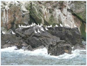 archipel des 7 iles1