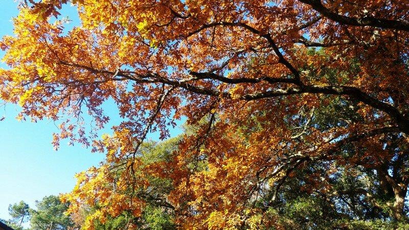 Feuillages automne 0712154