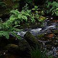 Destination bretagne : la forêt de huelgoat.