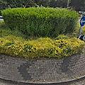 Rond-point à tavistock (angleterre)