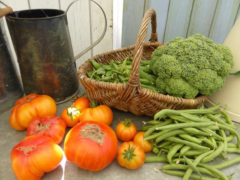 13-récolte du jour (4)