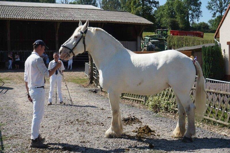 Lutèce 43 - 18 Juin 2017 - Concours élevage local - Hucqueliers (62) - 5e (Non Suitées)