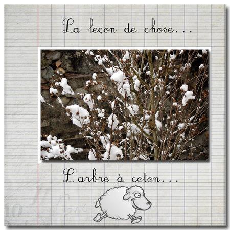 l_arbre___coton