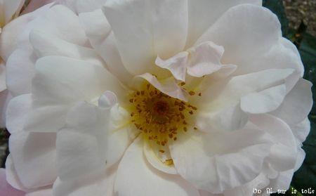 fleur_trianon_3