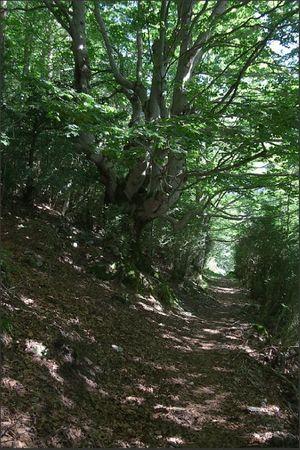 Escuain vallee circuit chemin forestier 250611