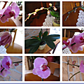 9_photos_orchidees