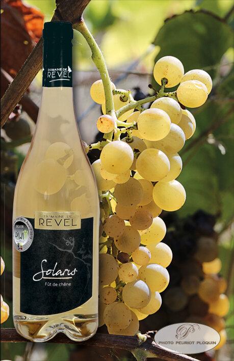 Vin_SOLARIS_et_grappe