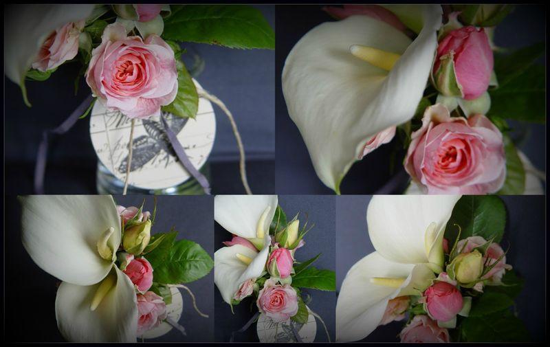 Rose1-001