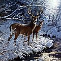 hiver riviere cerf