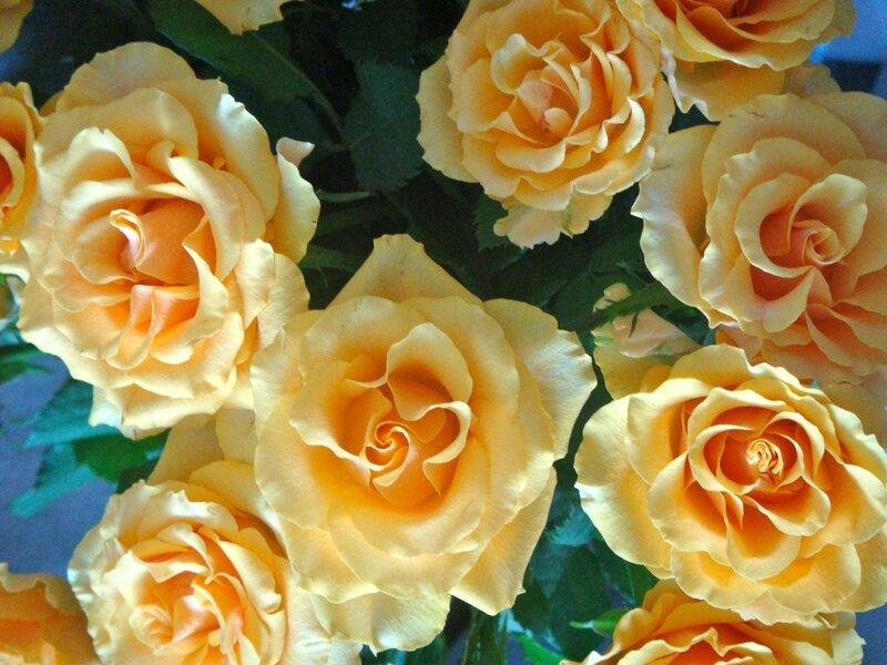 roses anniversaire1