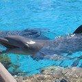 SW dauphin