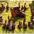 Réunion de lapins