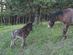 poneys_170511_039