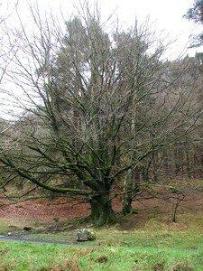 Glendalough__128_a