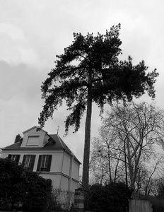 arbre 4