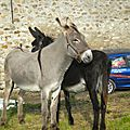 6-chevaux anes (27)