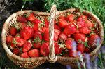 fraise-2