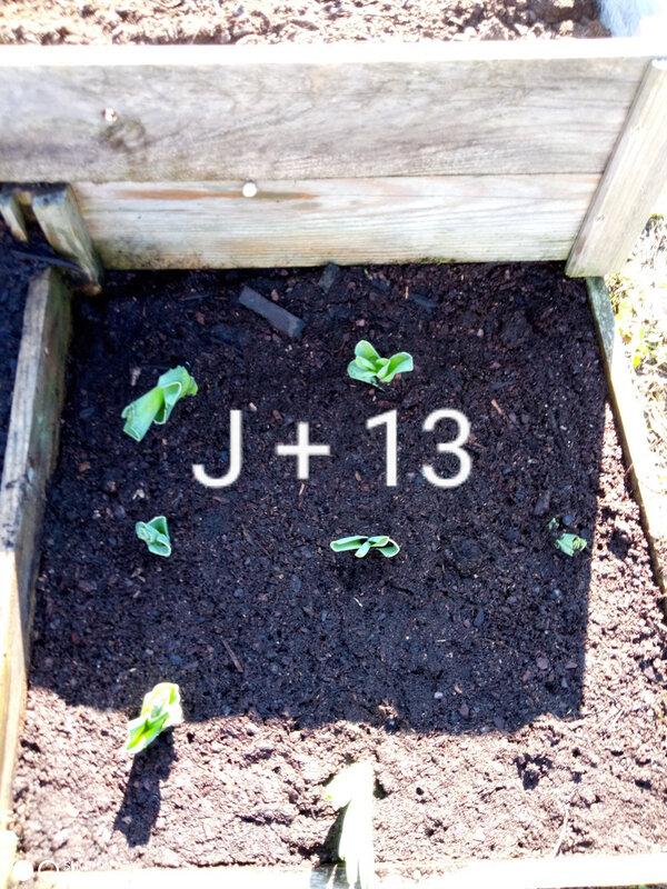 J + 13