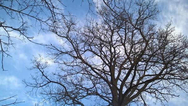 2020 temps de janvier et oiseaux feuilles