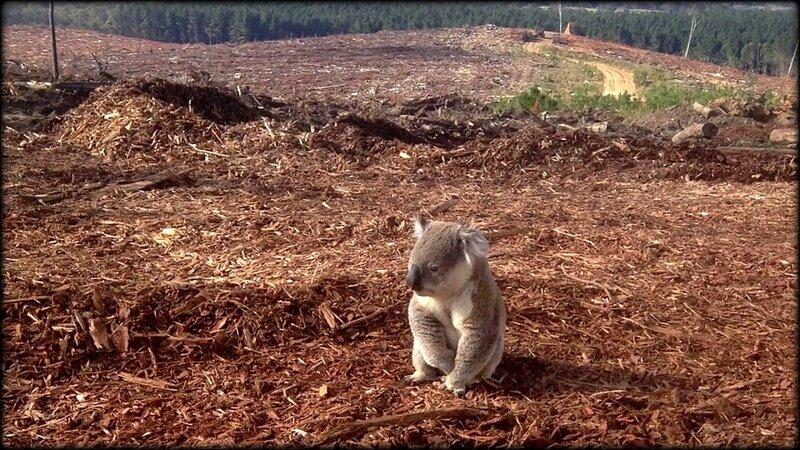 AUSTRALIE_DEFORESTATION_MASSIVE_