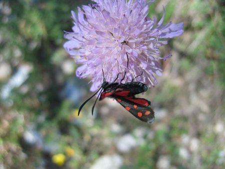 Fleur_insecte